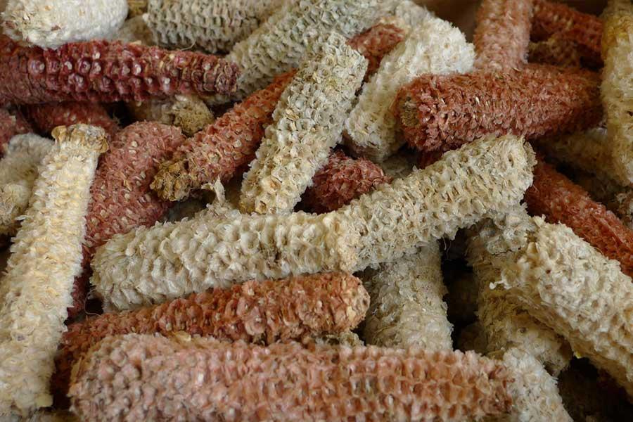 Woody Biomass Gasifier - Ankur Scientific