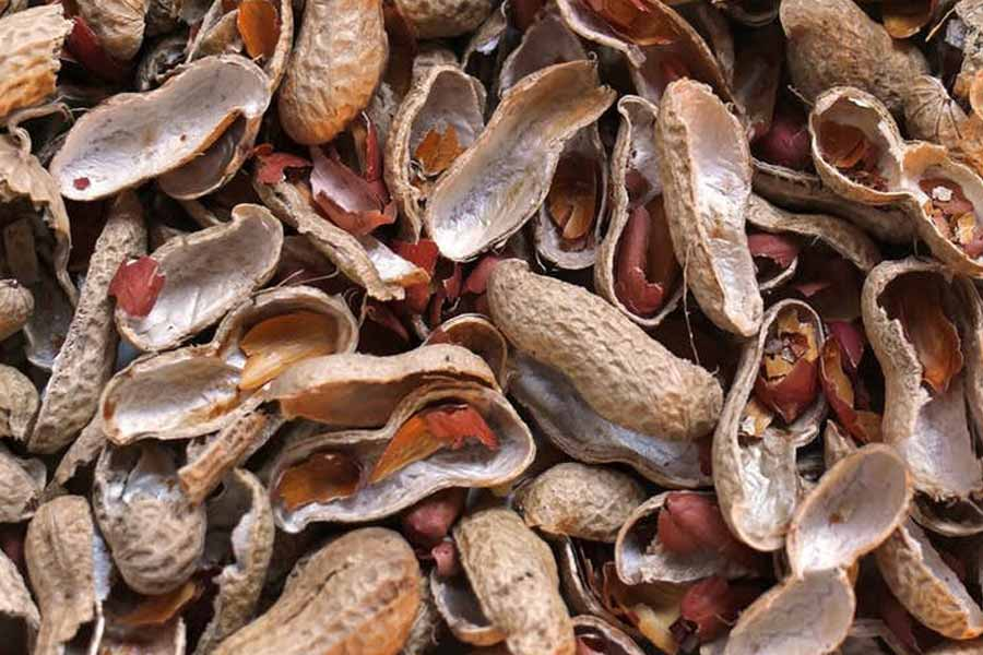 groundnut-shell